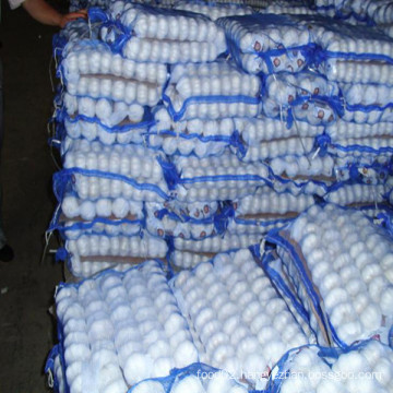 Fresh Normal White Garlic for Saudi-Arabia Market