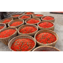 Cuidado de pele de nêspera Secas Wolfberry-Goji Zi