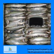 Novo preço de sardinha melhor qualidade de pouso