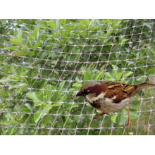 Plastic Anti Bird Net (DSY-NW)