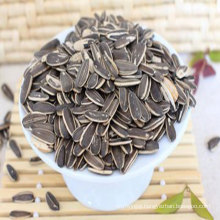 Organic and pink sunflower seeds from china