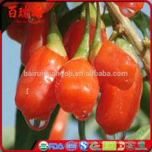 Getrocknete goji Beeren für Verkauf trockneten goji Beeren Nebeneffektsunburst superfoods organische getrocknete goji Beeren