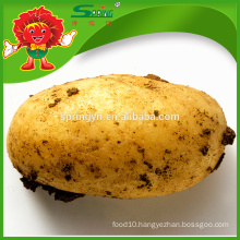 Organic yellow potato with lowest price