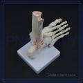 PNT-0109F Natural size human podarthrum skeleton medical model Foot Joint