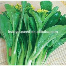 MCS03 LV résistant aux maladies haute qualité choy sum graines fournitures
