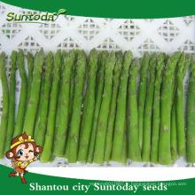 Suntoday légumes F1 grandir chinois assortis vert l'Europe haute fois semences végétales hybrides à vendre des graines d'asperges vertes (A4400)