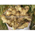 Latest Low Price Ginger, Yellow Fresh Ginger, New Ginger 2014