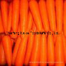 Neue Ernte frischen Karotten-Gemüse