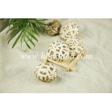Cogumelo de flor branca de alimentos secos