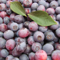 IQF Freezing/Freeze-Dried Organic Blueberry Zl-001 1