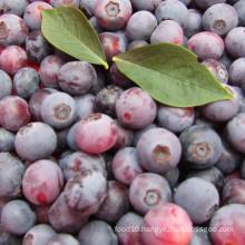 IQF Freezing/Freeze-Dried Organic Blueberry Zl-001 1
