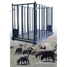 Escala de animais para ovelhas, gado, porcos