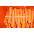 Meilleur prix du carot frais