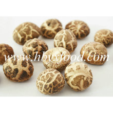 Cogumelo de flores secas verdes orgânicas de 2-2.5cm
