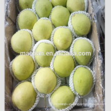 Peras frescas de Shandong