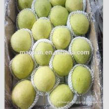 Fresh Shandong Pears
