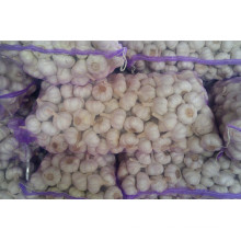 5.5cm Norma White Garlic