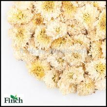 Crisântemo secado do chá erval natural da flor da matéria prima da montanha amarela
