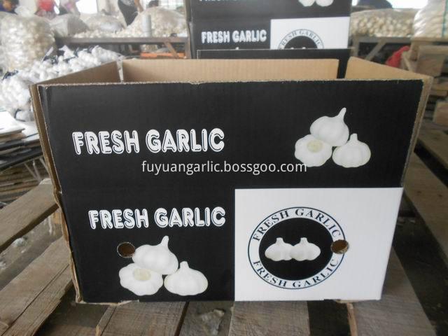 garlic (67)