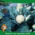 Suntoday White vegetable hs code cocauliflower Brassica oleracea Brassicaceae cauliflower vegetable harvester seeds(A41001)