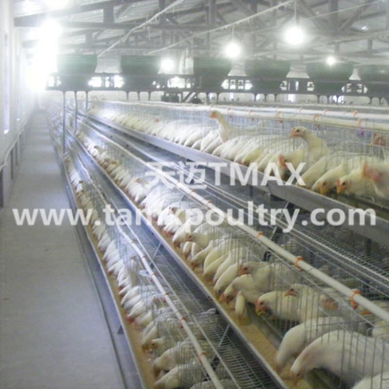 A Type Poultry Cages For Layers