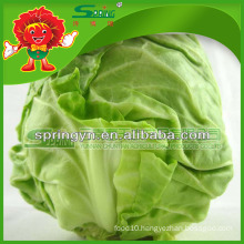 green cabbage for sale/fresh cabbage grade A