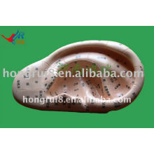 HR-514A vivid ear massage model12cm,ear model