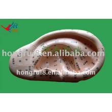 HR-514A яркая модель массажа уха 12см, модель уха