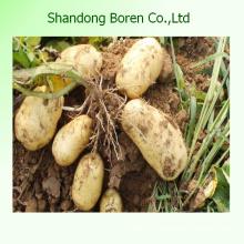 Свежие овощи Свежий картофель Свежий картофель Свежий картофель