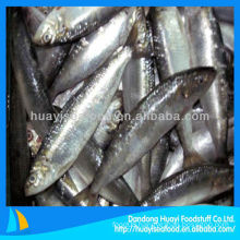 high quality new landing sardine wholesale sardines