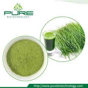 High water soluble Wheat Grass Juice Powder
