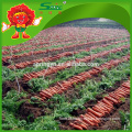 2016 new fresh chinese red carrot