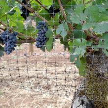 Grape Tree Bird Netting