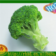 Fresh vegetables/ fresh broccoli price