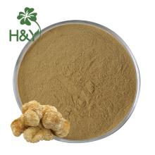 Heiß verkaufender Löwenmähnenpilzpulver-Extrakt