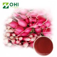 Rote Rettich-Farbe-natürliches rotes Pigment