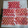 Sell Yantai Fresh Red Fuji Apple