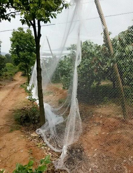 manufactory sales bird net with competitived price