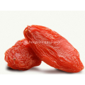 Sweet classique Goji Berry en gros chinois Wolfberry