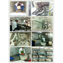 Sea bass fillet production