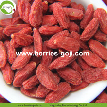 Factory Supply Fruits Bulk Sun Dry Goji Berry