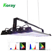 Equivalent LED 1000W Lighting for Grow Commercial Herbs