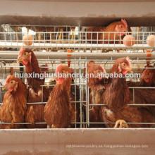 Soncap certificado de la capa de pollo jaula de la jaula de pollo jaula
