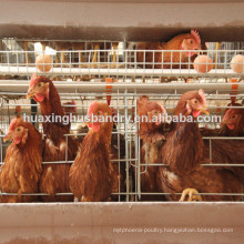 Algeria chicken cage for chicken farm