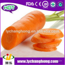 Chinese new crop high quality 80-150g fresh carrot