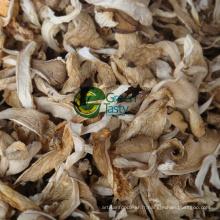 Vente chaude biologique Baby Oyster Mushroom