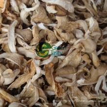 Hot Sale Organic Baby Oyster Mushroom