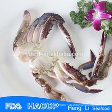 Export-Produkte gefrorene halb geschnittene blaue Schwimmen-Krabbe