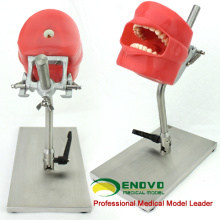 DENTAL01-1(12558) Removable Teeth Phantom Head for Tooth Prepare