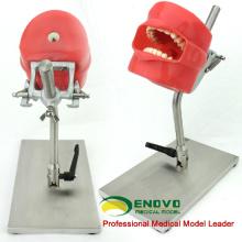 DENTAL01-1(12558) Съемный зубы модель головы для зубов подготовить